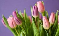С 8 марта! Дорогие наши женщины!